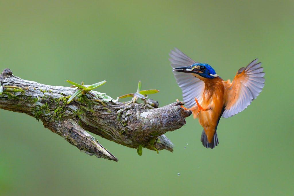 Vogelfotografie tips